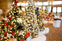 christmas-trees-1042542_960_720
